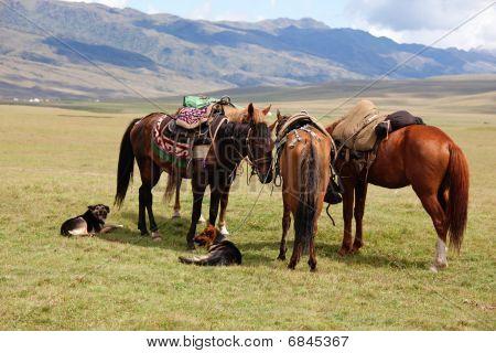 Group Nomadic Horses