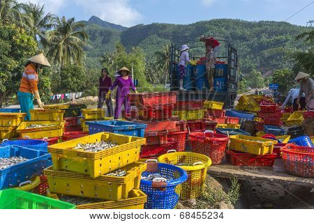 Women Load Colorful Baskets Of Sardines On A Truck.