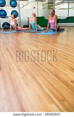 Yoga class in cobra pose in fitness studio at the leisure center