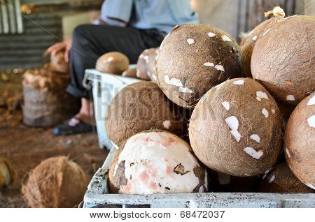 Coconut Processing Agricultural Produce