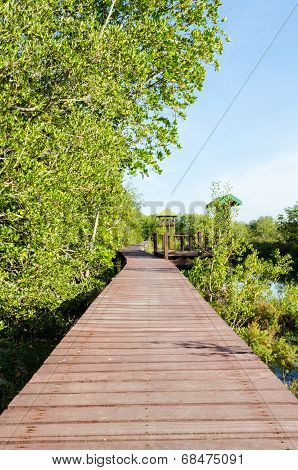 Wood Bridge In Mangroves