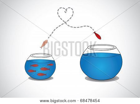 Alert Young small Fish jumping and Escaping From Crowded Small Glass Bowl To Big in heart love path