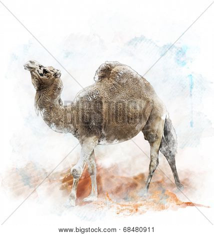 Watercolor Digital Painting Of  Single-Humped Camel