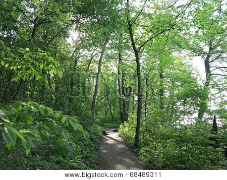 Sunlight Shadows and beautiful spring time tree growth at Starved Rock State Park