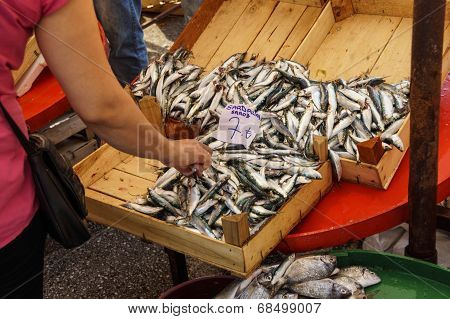 Fresh Sardines For Sale