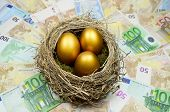 image of egg-laying  - Golden eggs in a nest laying on a bed of money - JPG