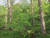 pic of starving  - Spring Time Trees at Starved Rock State Park