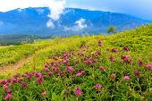 pic of crimea  - Wild flowers on mountains meadow - JPG