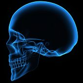 picture of mandible  - The human skull is a bony structure - JPG