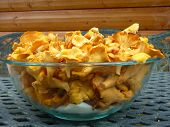 stock photo of chanterelle mushroom  - A very large bowl filled to the top with yellow Chanterelles - JPG