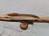 pic of slug  - A snail down and a slug up on a stick - JPG