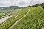 foto of moselle  - Vineyards in Germany along the slopes of  river Moselle - JPG
