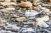 stock photo of tern  - Arctic Tern standing near her nest protecting her egg from predators - JPG