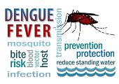 picture of mosquito  - Dengue Fever word cloud - JPG