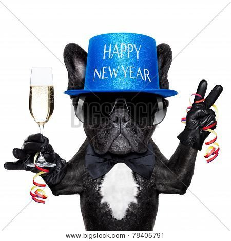Happy New Year Dog
