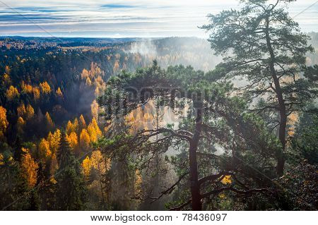 Dramatic Autumn Forest With Trees On Foreground