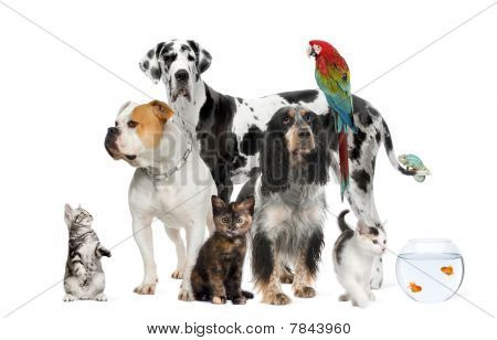 Group Of Pets Standing In Front Of White Background, Studio Shot
