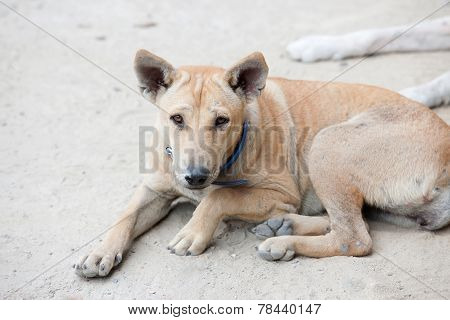 A Dog Waiting For Food In Road Side