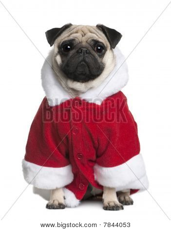 Pug In Santa Coat, 2 Years Old, Sitting In Front Of White Background