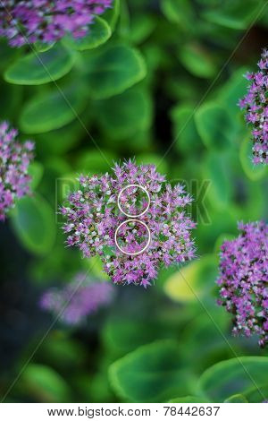 Two Wedding Rings On Lilac