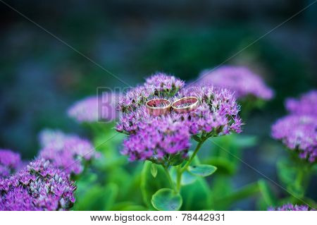 Wedding Rings On A Purple Flower