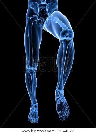 leg x-ray illustration