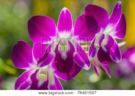 Branch Of Orchid