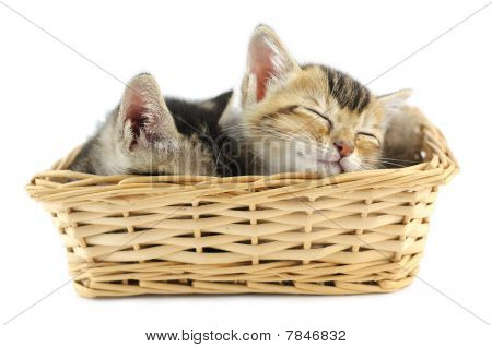 Kittens In Wicker Basket