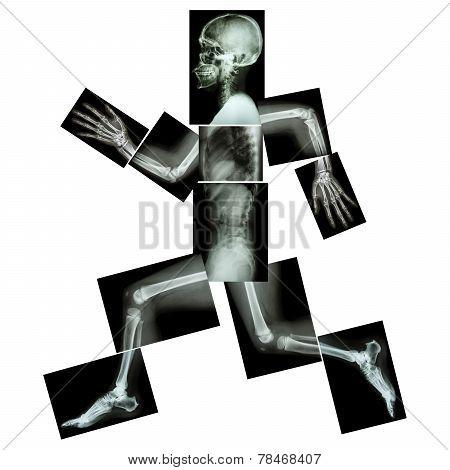 Aerobic Exercise (Human Bones Running)