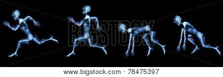 Human Bone Is Running. (step Of Run A Race),(whole Body )