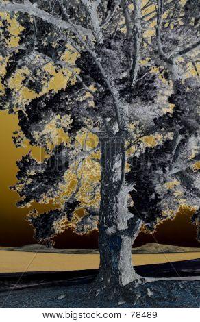 Tree Filter