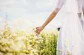 stock photo of sanctification  - Bride in white dress in beautiful daisies - JPG