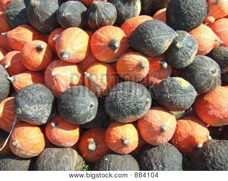 Gourds Squash Pumpkins