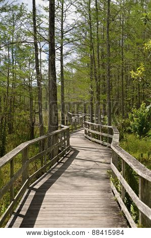 Boardwalk winds it way through a preserve
