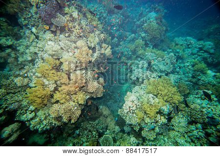 Red sea coral reef