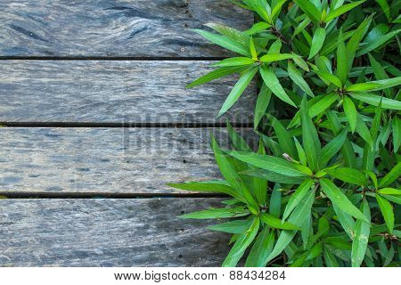 Wood And Green Plant  Texture