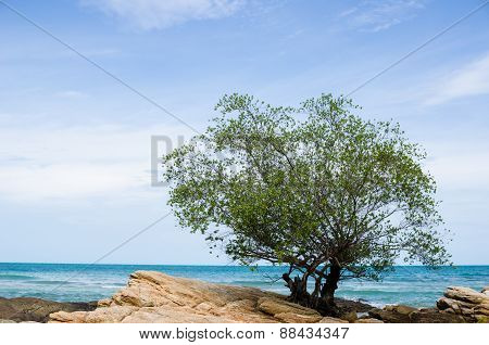 Tree And Blue Sea