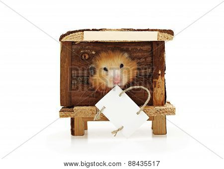 Hamster In The House. The Label For The Announcement.