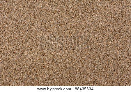 Shell Flinders Sand