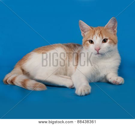 White And Red Kitten Lies On Blue