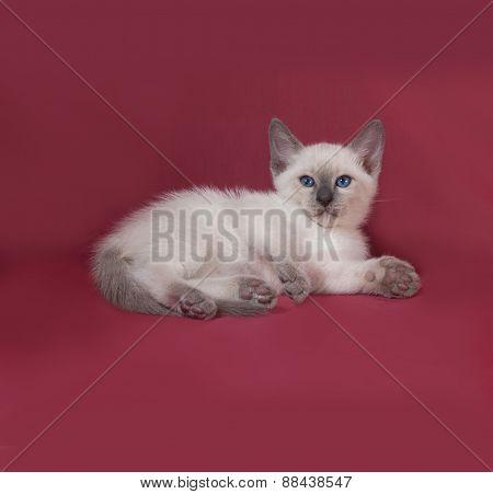 Thai White Kitten Lies On Red