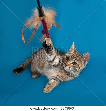 Striped Kitten Playing On Blue