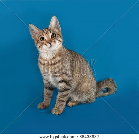 Striped Kitten Lying On Blue