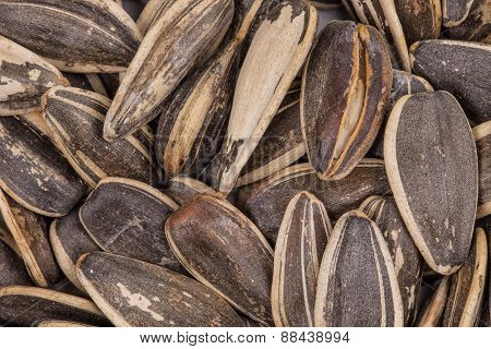Sunflower seeds close up.