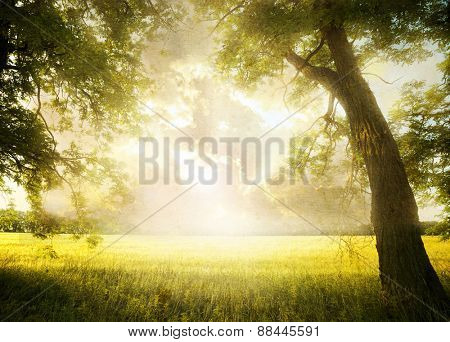 Grunge image. landscape with tree on the field