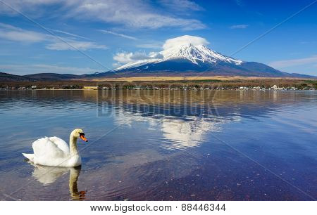 White Swan with Mount Fuji at Yamanaka lake, Yamanashi, Japan