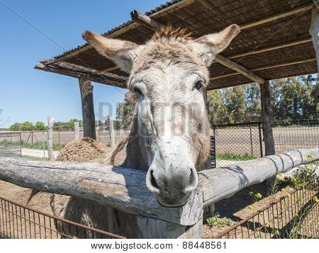 Donkey On A Farm