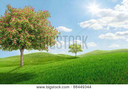 Idyllic Landscape With A Blooming Chestnut Tree