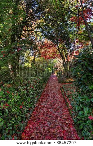 Nature's Red Carpet.  Pathway In Autumn
