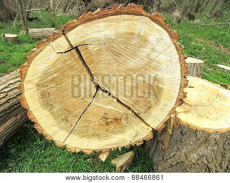 sawn logs